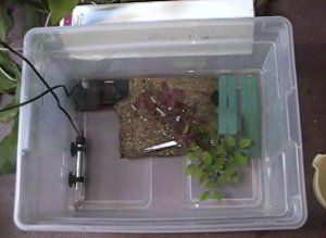how to make a setup box at home