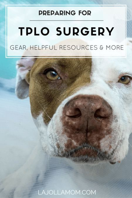 Detailed tips for dog TPLO surgery (torn ACL) preparation from gear to helpful websites.