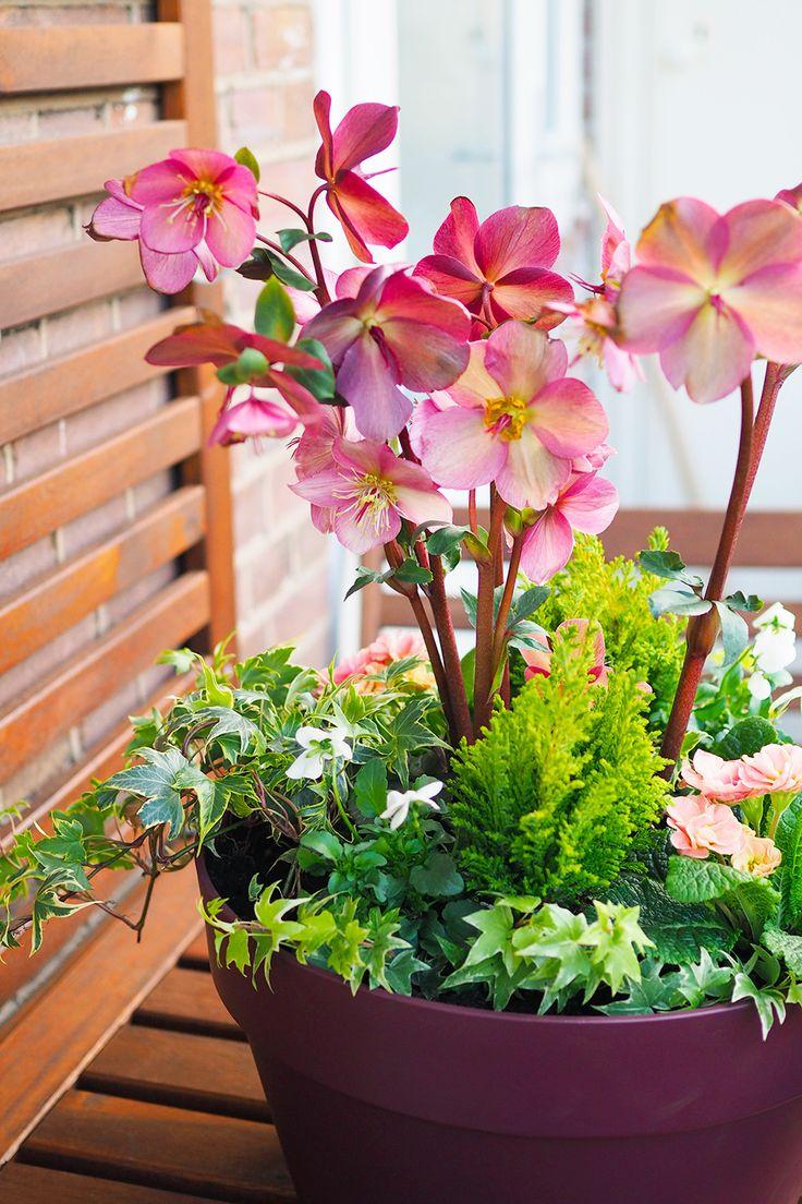 DIY Une jardinière fleurie pour la fin d'hiver Bulbes