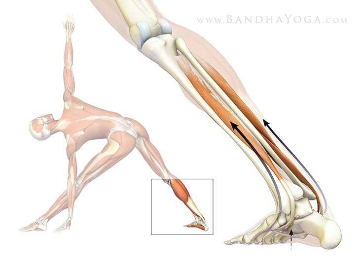 YOGA (In-Depth Anatomy):  Connecting To Your FEET.  via Daily Bandha. #postures #yoga #fitness