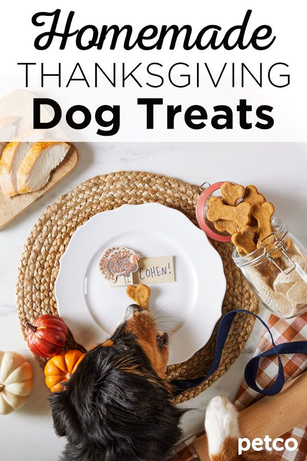 Show Your Pet How Thankful You Are For Them With These Homemade