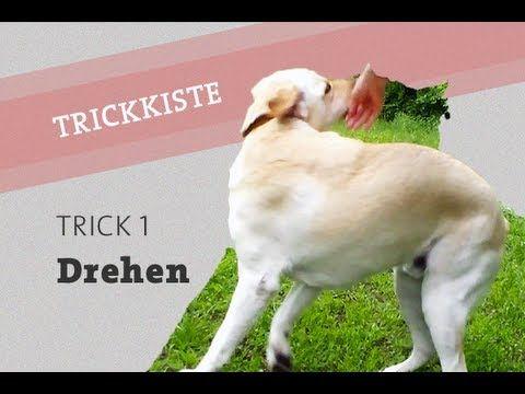 HUNDETRICK: Hund DREHEN beibringen - Pirouette Dreh dich Trick labrador Video Hundetraining - YouTube