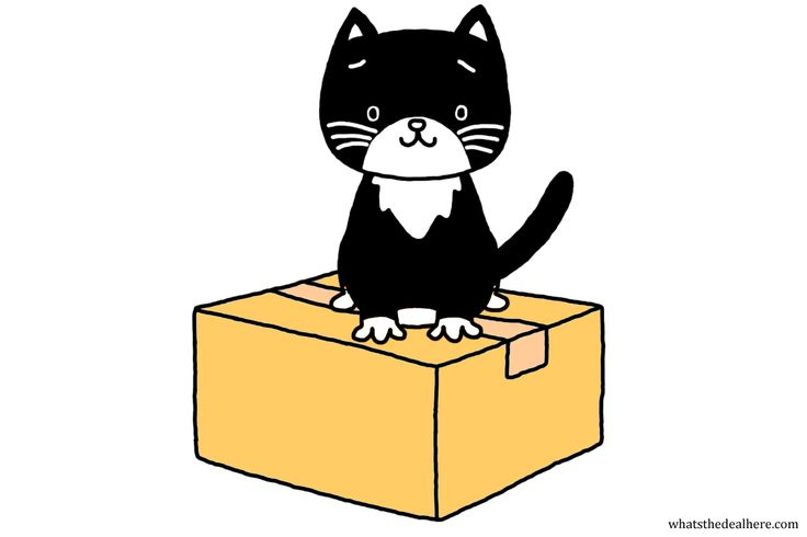 What's the deal with Schrödinger's famous kitty? Latest post delves into the box, link in bio.  #science #cat #quantum #physics #catsofinstagram