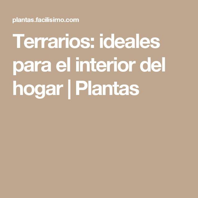 Terrarios: ideales para el interior del hogar | Plantas