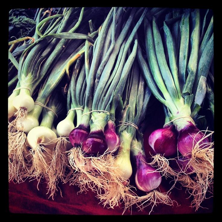 Italian Scallions at the South Pasadena Farmers Market