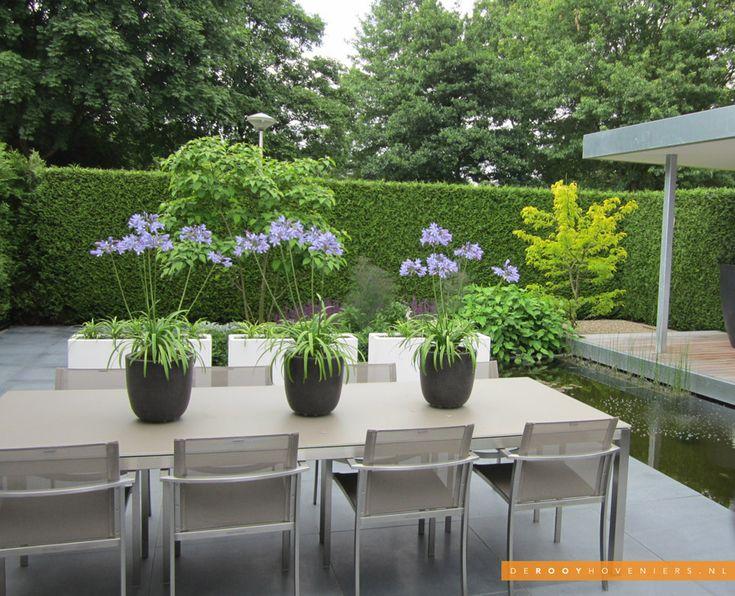 grey contemporary pots of agapanthus || Tuininspiratie - De Rooy Hoveniers