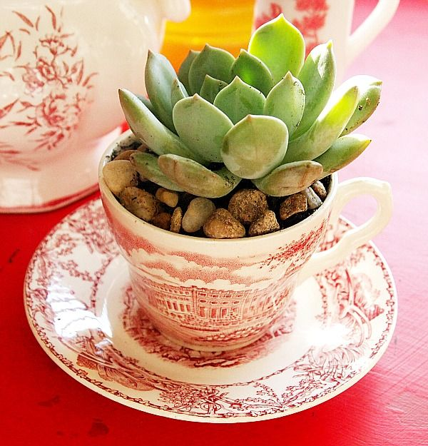 how to make a indoor succulent dish garden i am so doing this