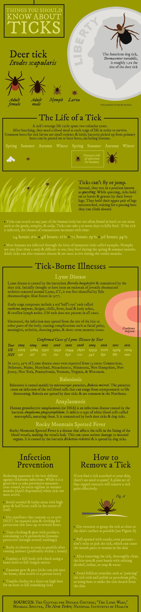 Things You Should Know About Ticks [Infographic] | New Hampshire Public Radio
