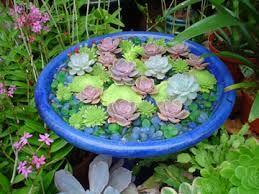 Indoor Succulent Shade Garden   Google Search