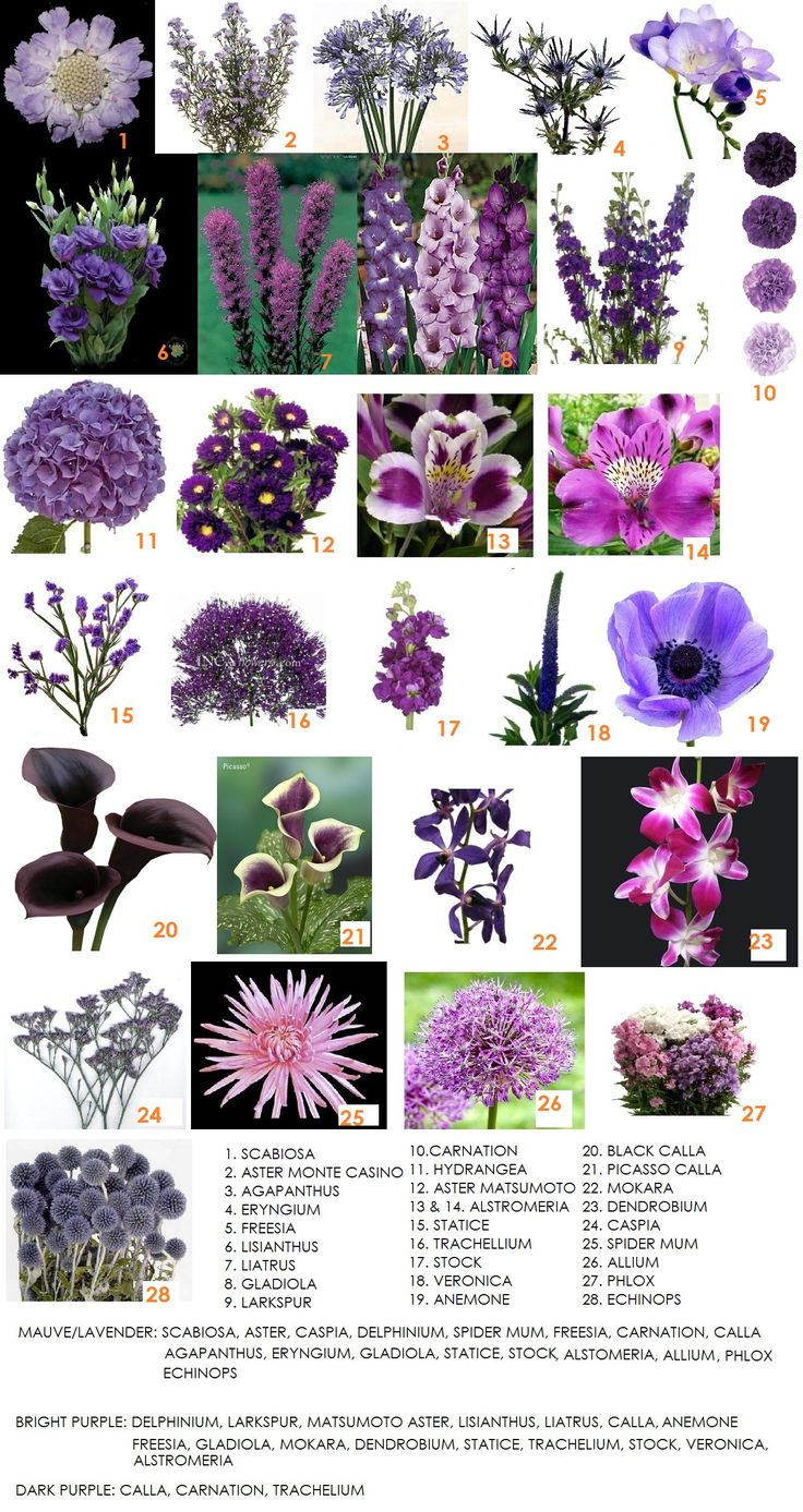Second in our series on color – Purple | Modern Petals Blog