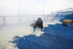 冬はゆでぼし大根干しが最盛期  西海市西海町の面高地区ではゆでぼし大根が生産されてて特産になってます ゆでた大根を冷たい風に干すことで甘くておいしいゆでぼし大根ができるんですよ 煮物やサラダの材料にどうぞ  http://ift.tt/2gz1XQd tags[長崎県]