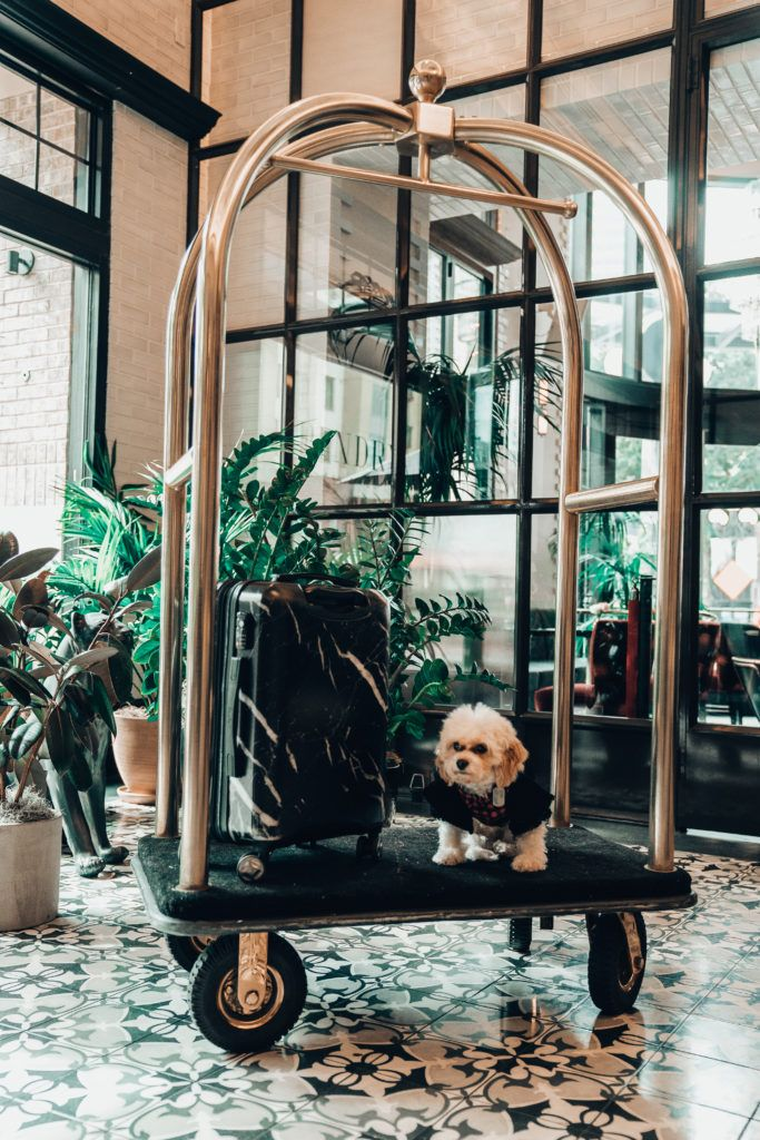 Dog Friendly Hotels And Restaurants In San Diego Dog Friendly Hotels San Diego Restaurants Dog Friends
