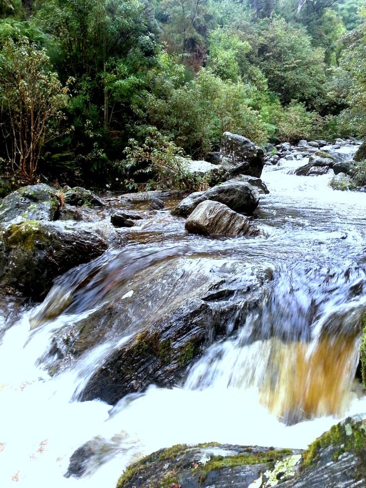 River in a forest just out of Mosgiel, Dunedin