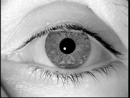 Digital Iris Fakes Made with Evolving Algorithm Fool Biometric Scanners | Popular Science