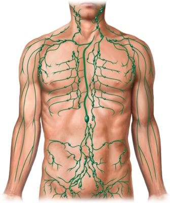 Lymph Nodes Where Are They | Lymph Nodes