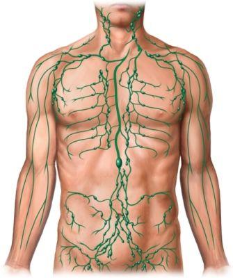 lymfaticky system zdureni uzlin byliny bylinky babske rady caje masti obklady…