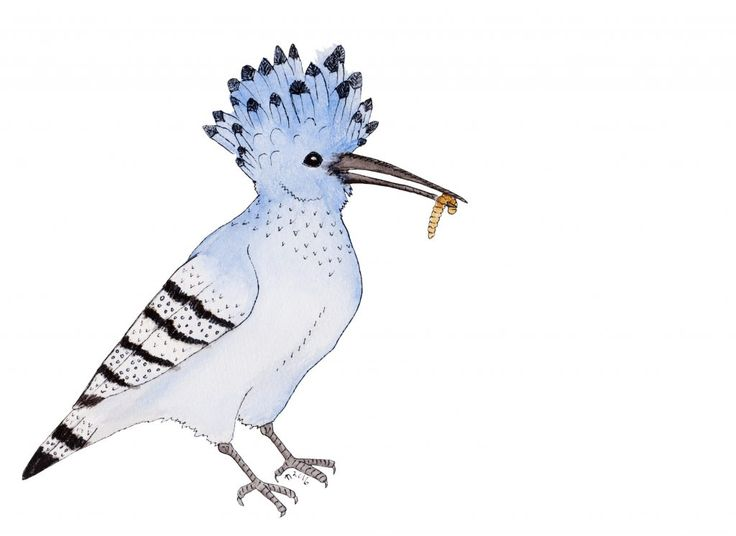 Hungry Azure Hoopoe by Linda Ursin Part of the message this Hoopoe has for you is to wear your crown in a good way, to sing your own song and come into your own personal power.
