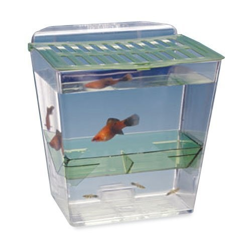Breed and show nursery fish tank for Fish tank show