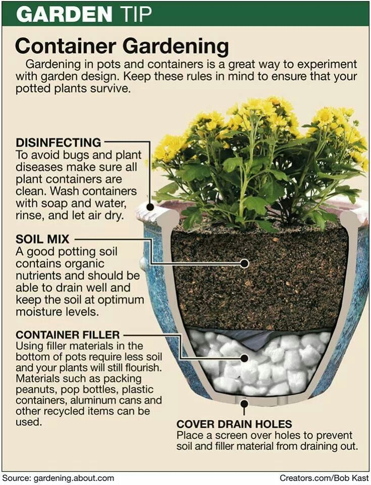 315 best thrillers fillers and spillers for containers for Great small garden ideas