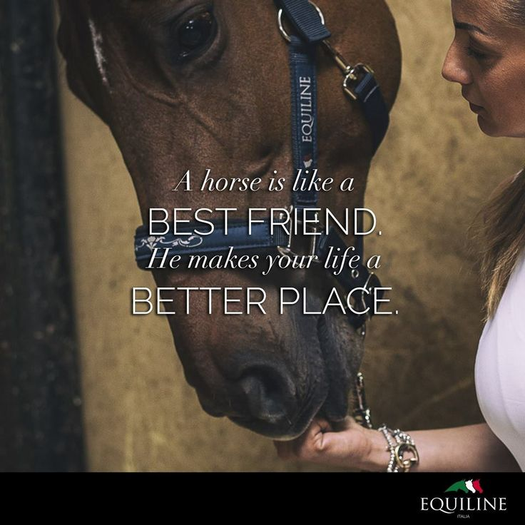 A horse is like a best friend. He makes your life a better place. ❤ #Equiline #Quotes