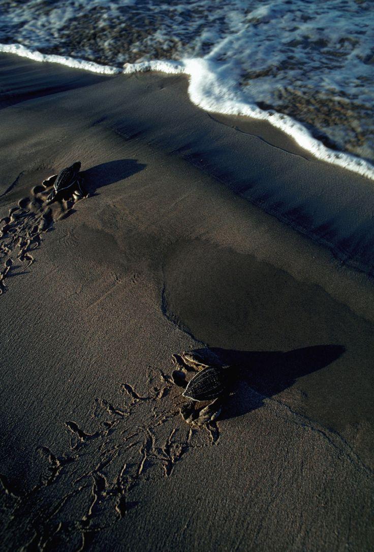 Las 50 mejores playas del mundo:  Playa Grande, Provincia de Guanacaste, Costa Rica.