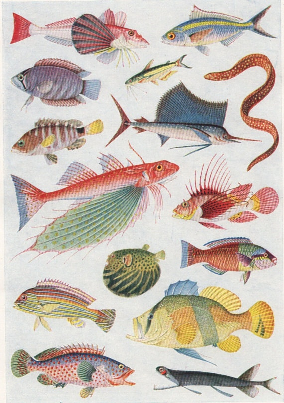 Antique print colour fish chart 2 1930s beautiful wall for Dreaming of fish