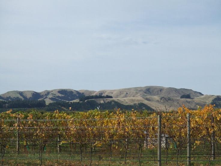 Autumn colours and the Martinborough hills.