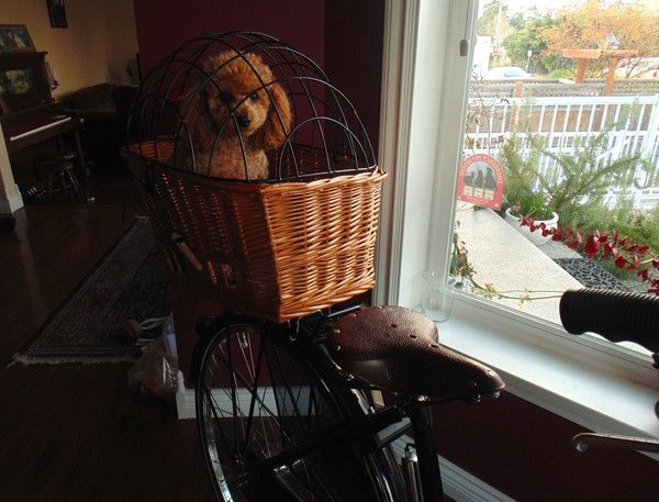 "Puppy Rides a Bike  "" Susan,Thank you!  He LOVES it!! So do I (smile face)""  Jill on March 6th, 2015, Sidney, BC"