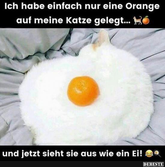 Ich habe einfach nur eine Orange auf meine Katze gelegt..