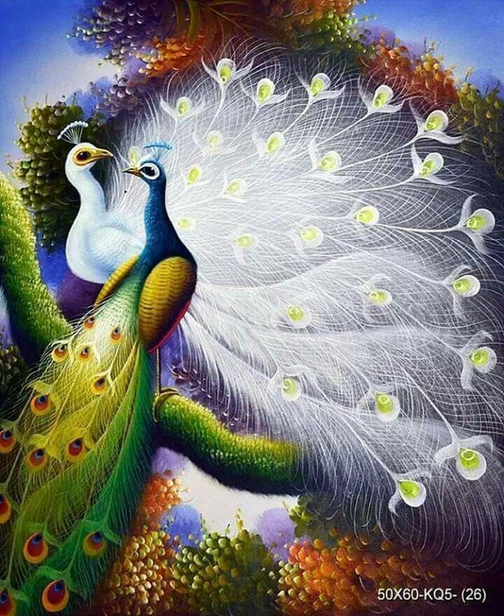 Pikok 🌤🌤 Peacock Painting Peacock Art Peacock Canvas