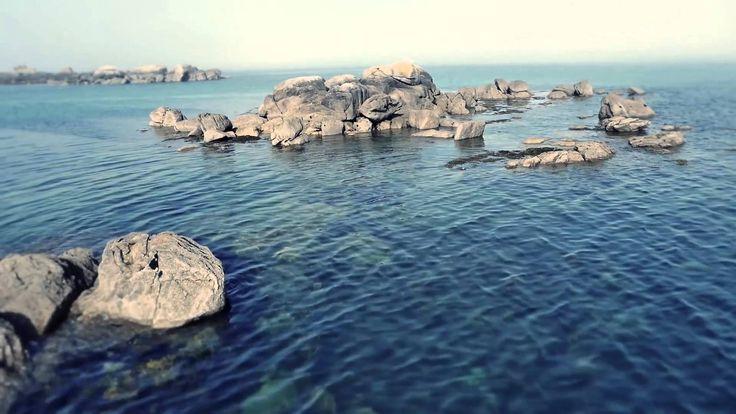 Ismerkedjen meg az algák varázslatos erejével Ön is!  http://www.thalion.hu/