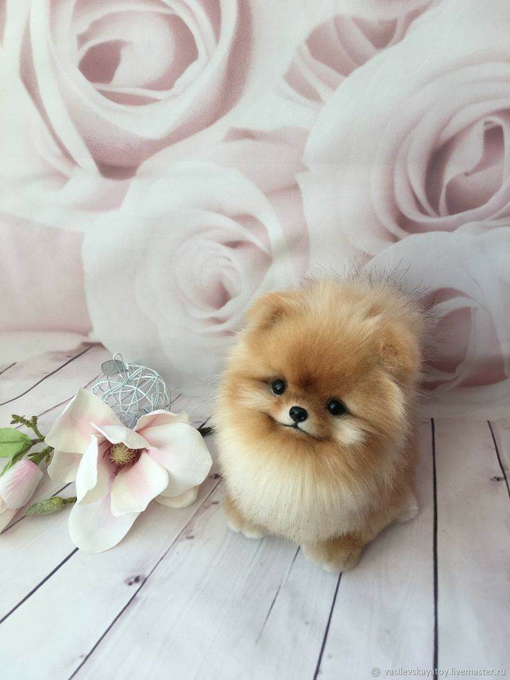 Cute Puppy Cute Puppy Pictures Cute Puppy Wallpaper Cute Puppy Poses Dogloversclub Cutedogpics Doglover Cute Puppy Wallpaper Cute Fluffy Dogs Cute Puppies