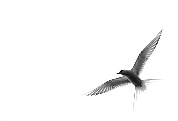 Bird against white background - prints for sale