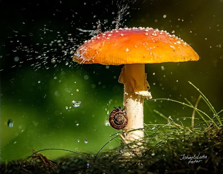 Mushroom Umbrella-Wild animals have their own ways of coping with rainwater, but sometimes, when they find themselves under an opportune leaf, flower or mushroom, they look just like people hiding from the rain under umbrellas!