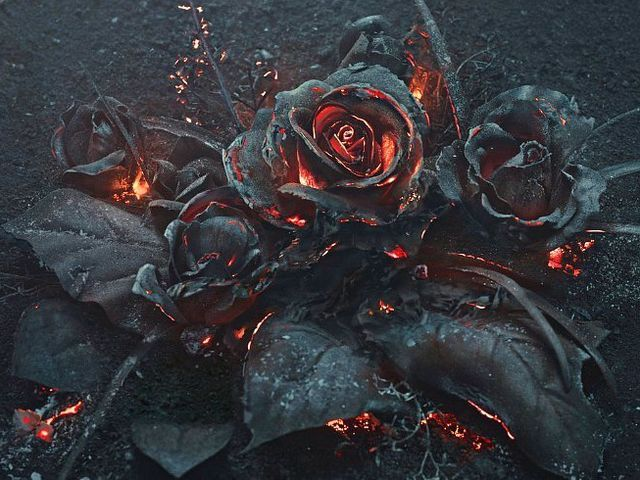 black roses, fire. embers, burning