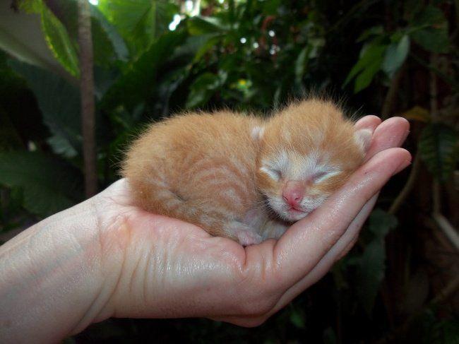 Too Cute .gr _ Το δικό τους site : 25 αξιολάτρευτα μωρά ζώα που κυριολεκτικά.. χωρούν στη παλάμη του χεριού σας
