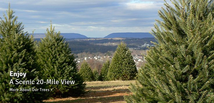 Wycoffs Christmas Tree Farm in Belvidere NJ (With images ...