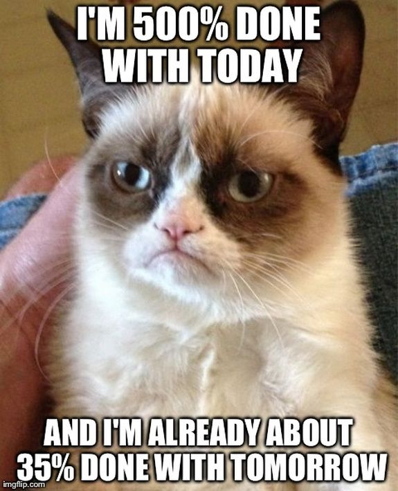 Everything You Need to Know About Grumpy Cat