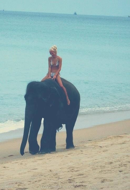 Elephant Ride on the Beach summer animals beach ocean sea ride elephant woman