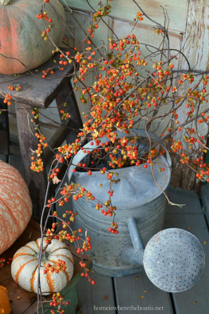 watering can with bittersweet vine for fall porch decor - Fall Harvest Decor