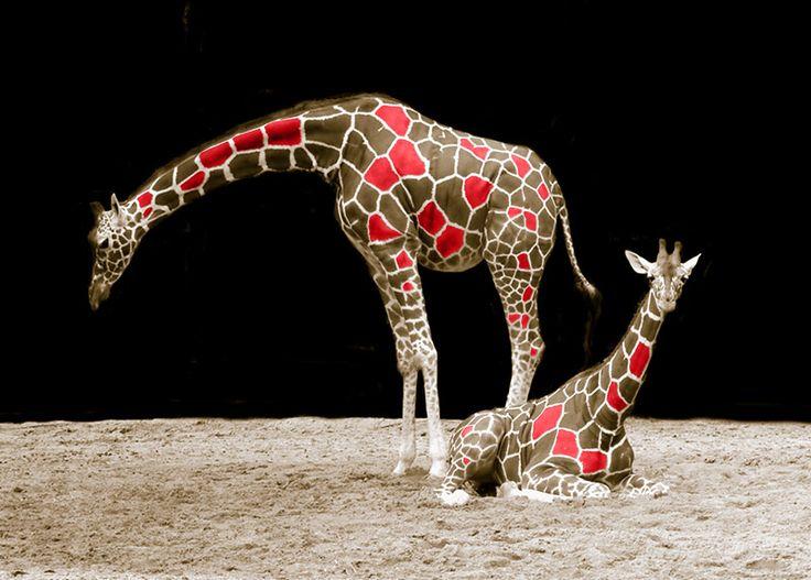 WallArt - Giraffe - Presentorium