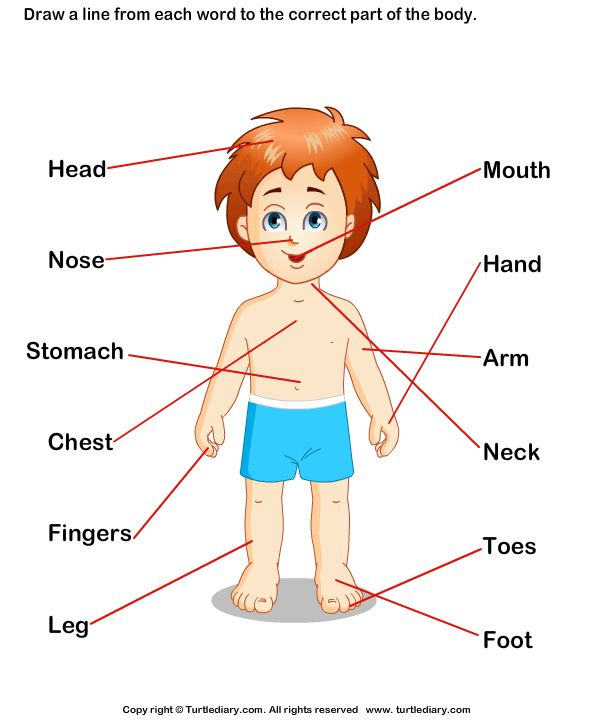 Label the Body Parts Answer