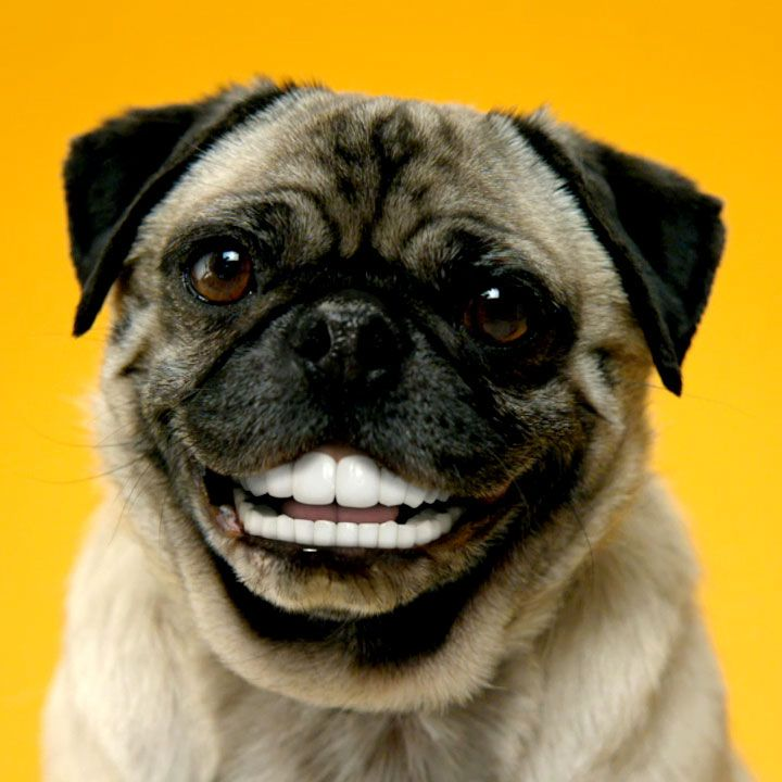 Denture your own dog! Just upload a picture... that's it! Have fun!  http://www.pedigree.com/All-Things-Dog/oralcare/default.aspx