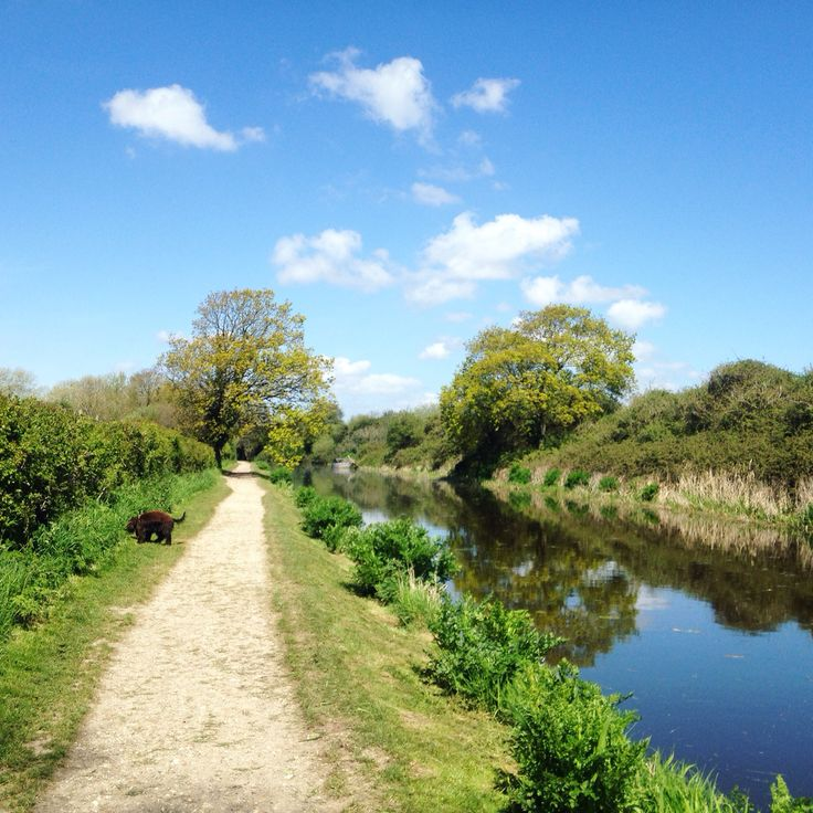 Dog walk along the canal in Chichester, West Sussex
