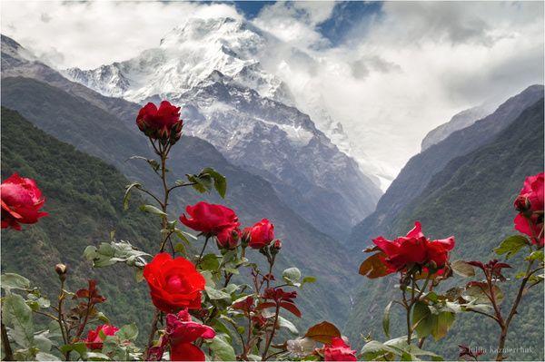 Гималайская весна