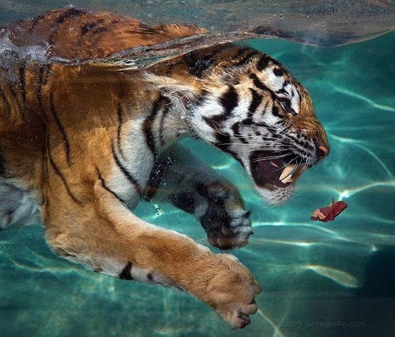 This cat's not afraid of the water!