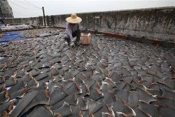 China Bans Shark Fin Soup From Official Banquets
