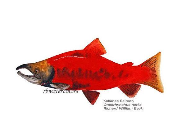 Red Boy Room Decor Kids Wall Art Kokanee Fish By Rbwatercolors Chri