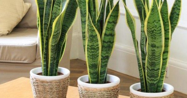 5 roślin do sypialni, których obecność pozwoli Ci lepiej spać