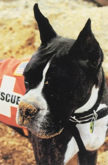 Dog Heroes of September 11th- Louie